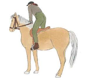 pferd empfindlich im rücken